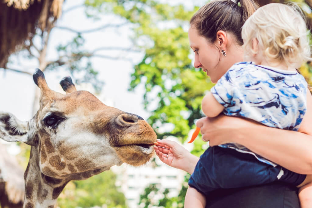 Mother and son watching and feeding giraffe in zoo. Happy kid having fun with animals safari park on warm summer day.