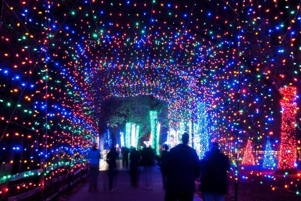 Wild Lights at the Detroit Zoo | LittleGuide Detroit