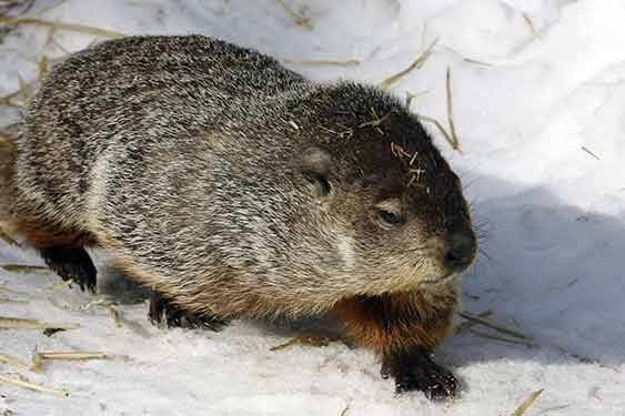 Groundhog's Day Celebration!