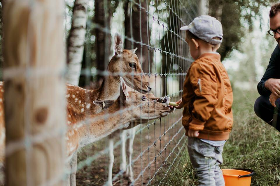 7 Family Activities For Spring